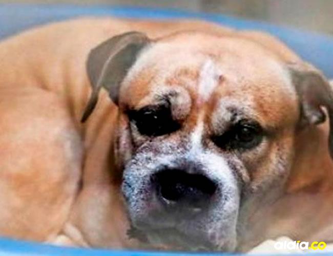 'Chico' se encuentra actualmente es un centro para animales a la espera de que un juez decida su futuro | Change.org
