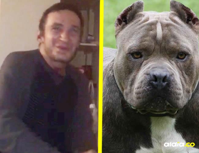 El perro fue sometido a pruebas para determinar las causas del ataque y encontraron que tenía cocaína y morfina en la orina | SWNS.COM, Leinterexpress.com