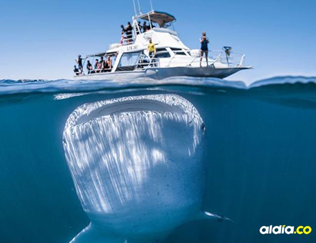 Esta especie suele permanecer en la profundidad del mar   Al Día
