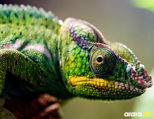 Existen diferencias entre animales exóticos y de fauna silvestre   Cortesía