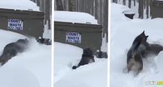 El solidario animal notó que su amigo no podía avanzar por más que lo intentara, así que corrió a salvarlo | Captura de vídeo