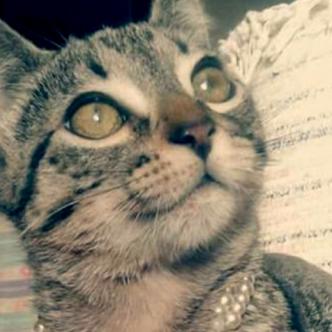 La gata tenía 4 meses cuando fue asesinada a golpes por el sujeto | Al Día