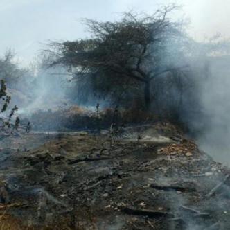 Durante el 2017 resultaron afectadas 28 hectáreas de reservas forestales.