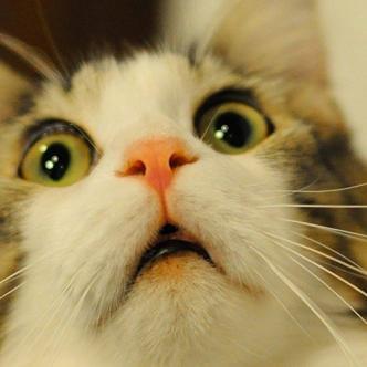 El Día Internacional del Gato, que se celebra hoy, se relaciona con el ex presidente estadounidense Bill Clinton y su gato, Socks. | GIF