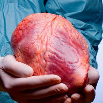 Ser donante de órganos pueden salvarle la vida a miles de personas | Parhlo