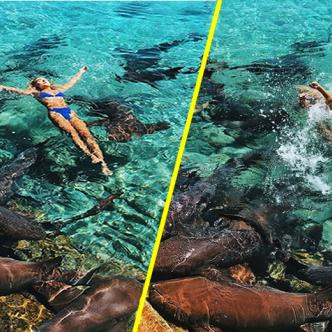 Katarina Zarutskie posando en medio de tiburones nodriza. | Tomada de: NBC News.