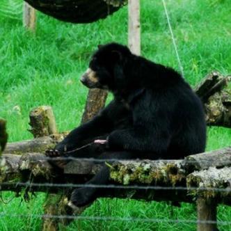 El zoológico de Barranquilla tiene un plazo de 30 días para trasladar a 'Chucho'  a la Reserva Natural de Río Blanco en Manizales | Colprensa