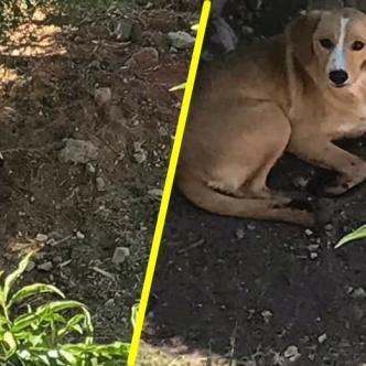 Mascotas víctimas de maltrato I Facebook