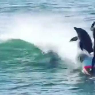 Los delfines también querían disfrutar de las olas en el soleado día. | Tomado de: Captura de pantalla.