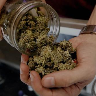 La ley que despenalizó y aprobó el consumo de marihuana en el país charrúa consta de unos 100 artículos | Ilustrativa