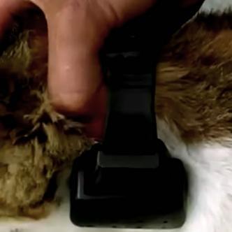 El gatico fue encontrado en un mueble con el dispositivo puesto | Captura Noticias Caracol